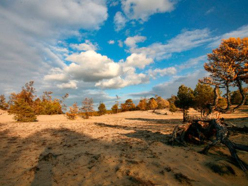Леса баргузинского залива