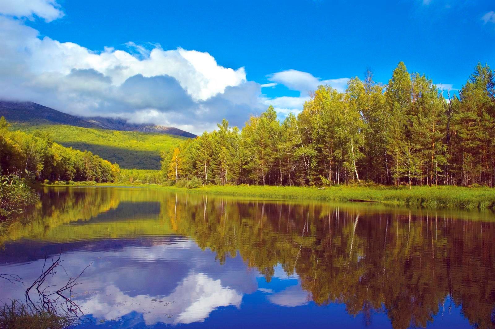 фото тайга лес