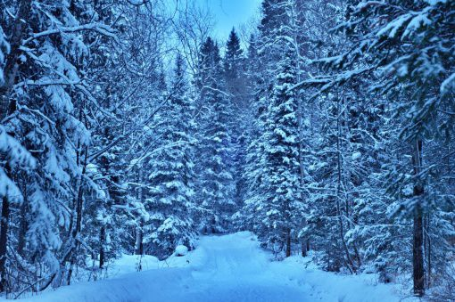 Зимний лес. Заповедник Столбы.