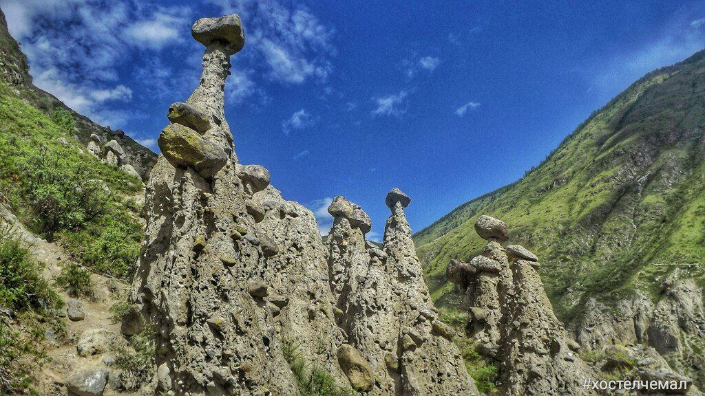 сибирь грибы фото