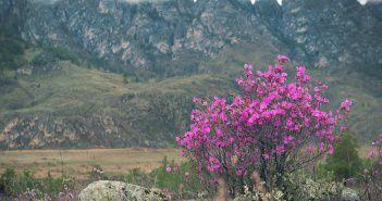 Чем прекрасен Горный Алтай?