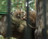 Утро в Новосибирском зоопарке Фото: Валерий Васин