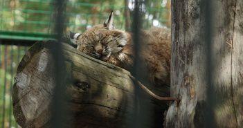 Новосибирский зоопарк, Фото