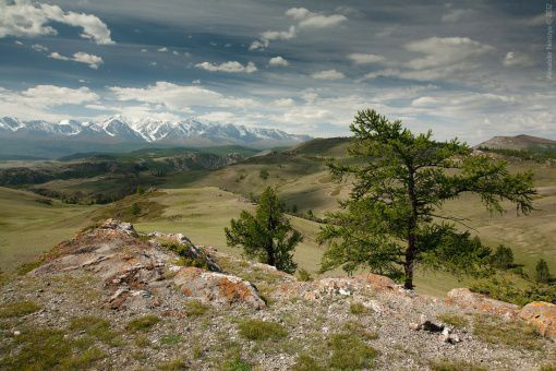 Республика Алтай, Улаганский район, село Акташ, Северо-Чуйский хребет  Фото
