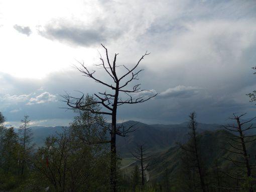 Перевал Чике-Таман, Алтай, фото