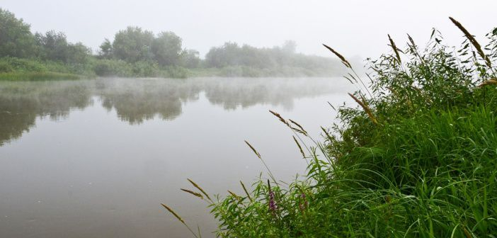 Раннее туманное утро на реке Иня. Новосибирск, середина июля 2016  фото: Светлана Абатурова