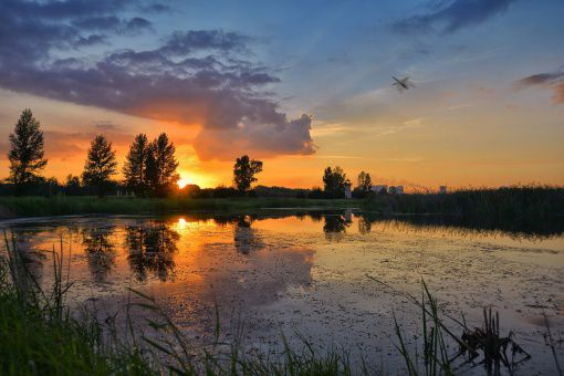 Омск, Птичья гавань, Фото