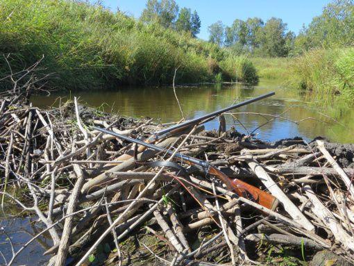 Лаптевка, Новосибирская область, Васюганские болота, Бакса, фото