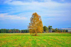 Сибирь, осень, Прокопьевский район, Кемеровская область, фото