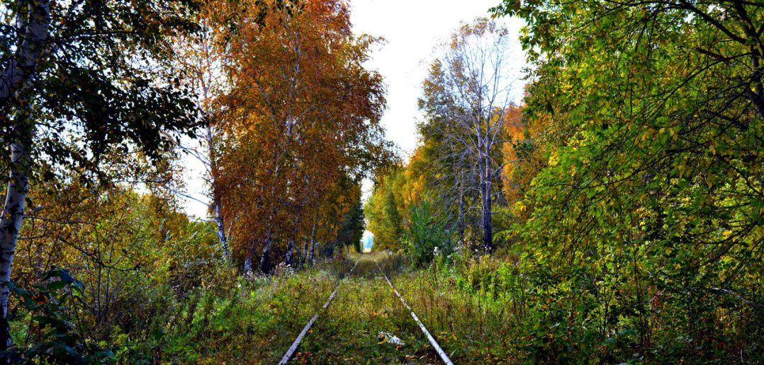 Омская область, Осень, фото