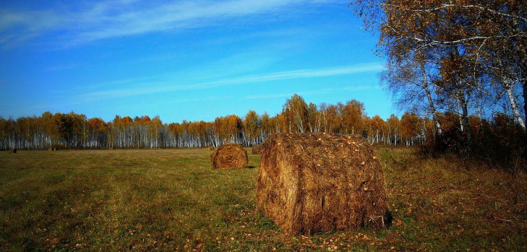 Новосибирская область, Лесная Поляна, фото