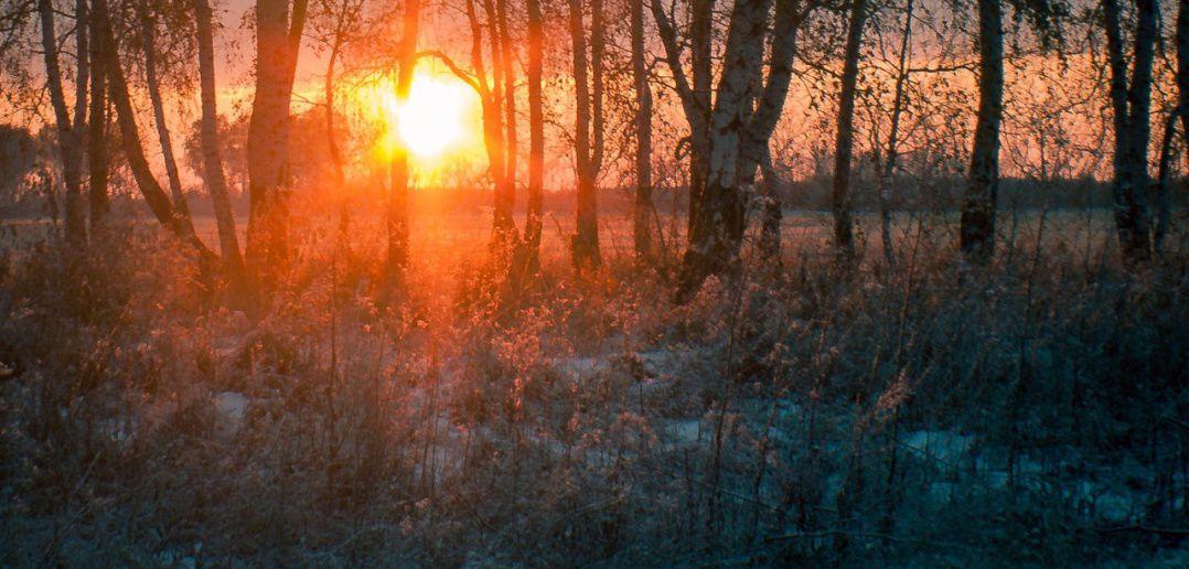Омская область, Красноярский тракт, Фото