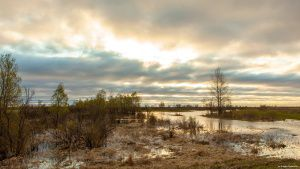 Река Чакча, Ялуторовский район, фото