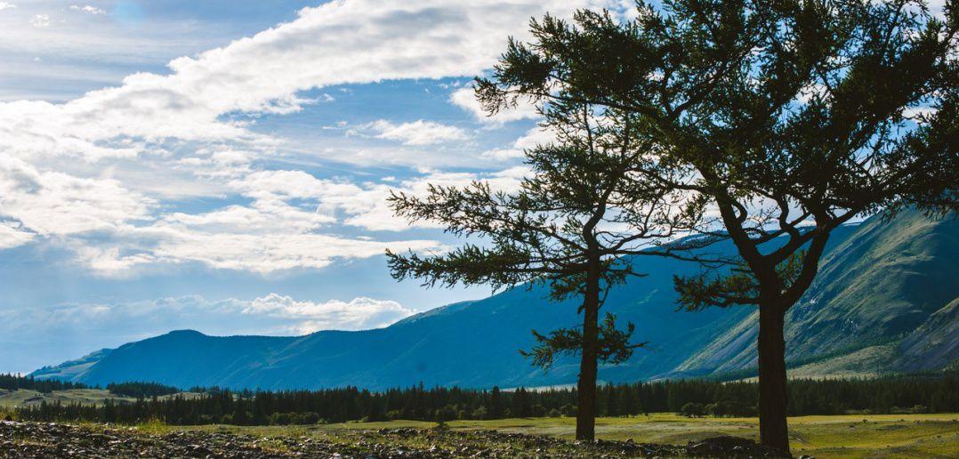 Курайская степь, Северо-Чуйский хребет, Алтай, фото