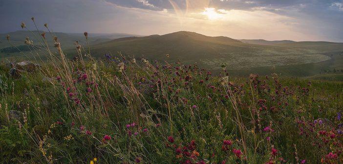 Летняя свежесть полевых трав после дождя. Забайкальский край.   Фото: Анна Аникина.
