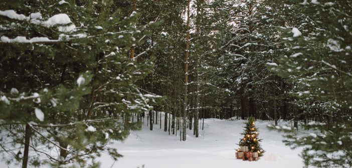 В лесу родилась ёлочка  Томск   фото: Лилия Королькова