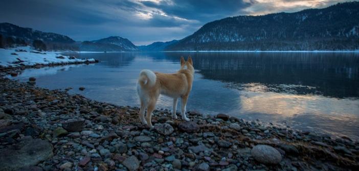 Встречая рассвет!  Телецкое озеро. Республика Алтай.  Фото: Александр Савченко