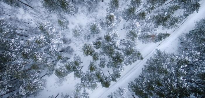 Окрестности села Зудилово (Первомайский район, Алтайский край).  Январь 2017 г.  Фото: Денис Соломахин