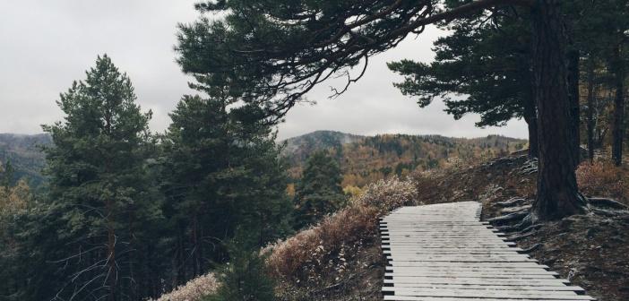 Осенний лес заповедника «Столбы»   фото: Машуля Локтина