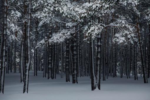 Сибирь, Зима, Фото