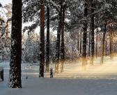 Утро в зимнем лесу. Иркутская область. Фото: Сергей Варочкин