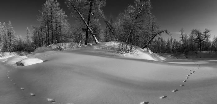 По следам невиданных зверей. Ямал, 2017. Фото: Камиль Нуреев