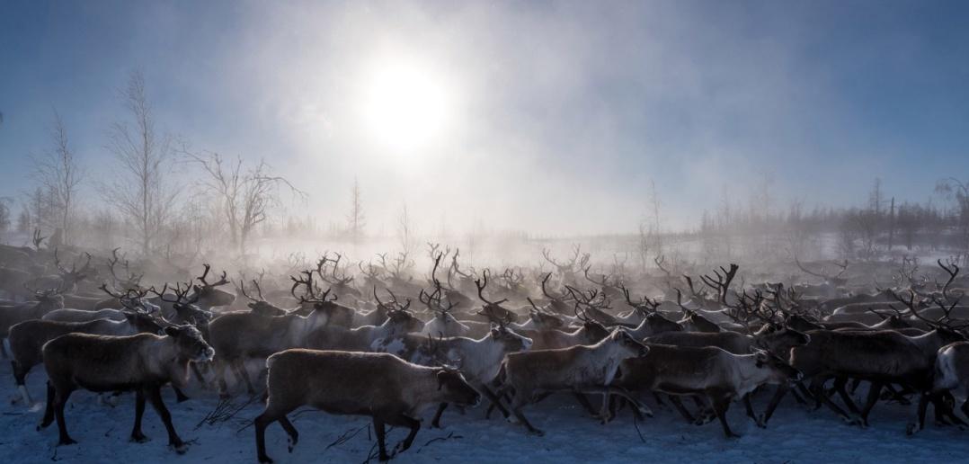 ЯНАО, Пуровский район, фото