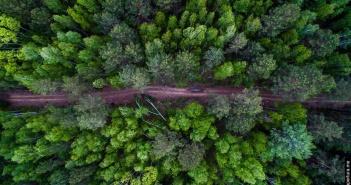 Сибирский лес, Фото