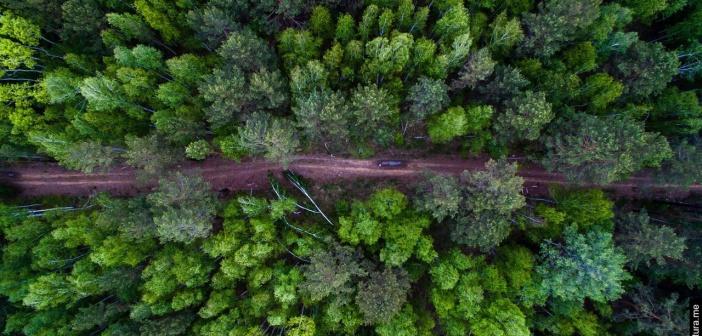 Сибирский лес летом.   Фото: Евгений Грин