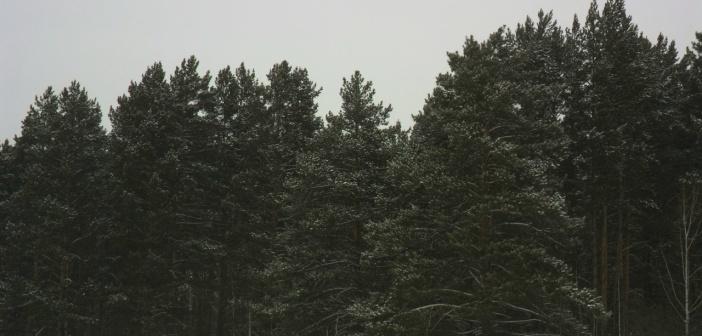 с.Борисово, Кемеровская обл.   фото: Марина Гор