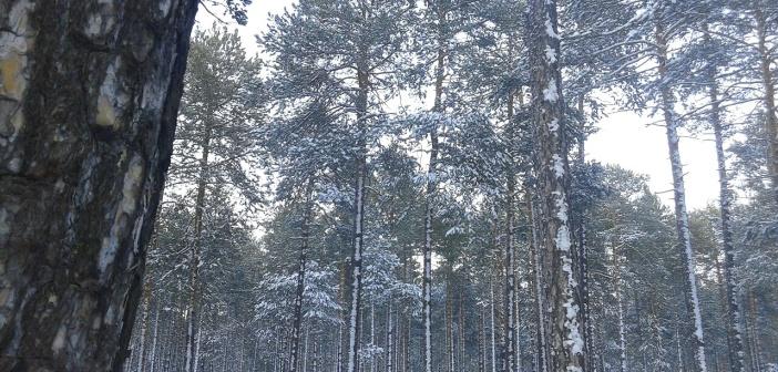 Не хочет зима нас покидать) пгт Федоровский Ханты-Мансийский Автономный округ   фото: Александр Маслов