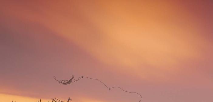 Поймать оленя!  Ямал, фото: instagram anisimovphoto