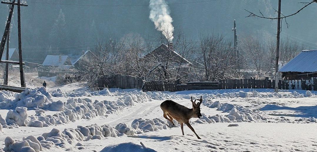 Верхняя Базаиха, Березовский район, Красноярский край, Фото