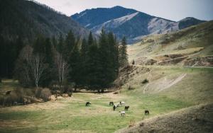 Чике-Таман, Республика Алтай, фото
