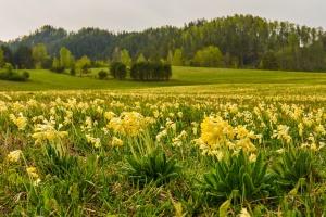 Чемальский район, Алтай, фото