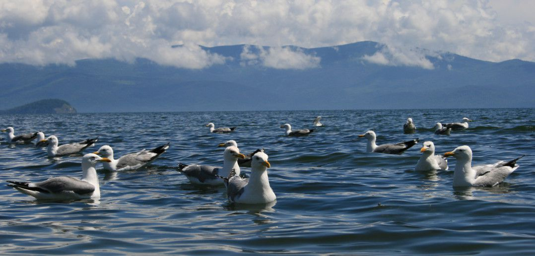 Чивыркуйский залив. Байкал