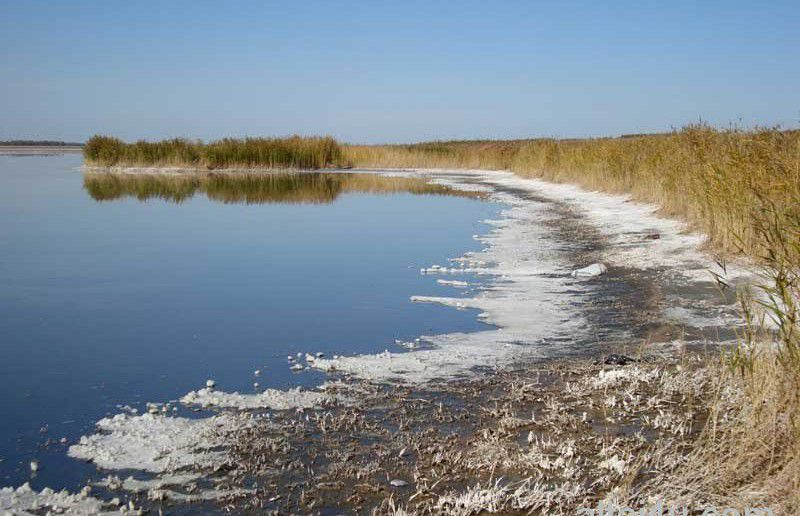 Озеров Яровое