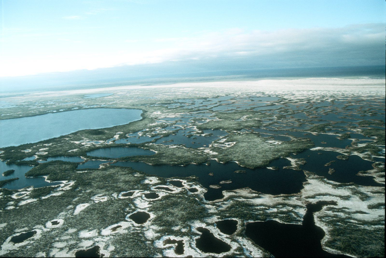 Большое Васюганское болото