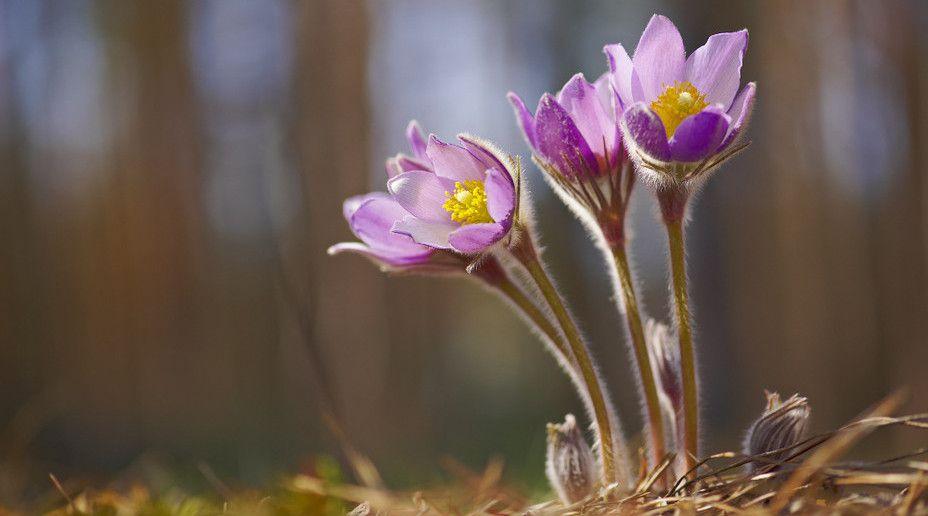 Цветущая приангарская тайга