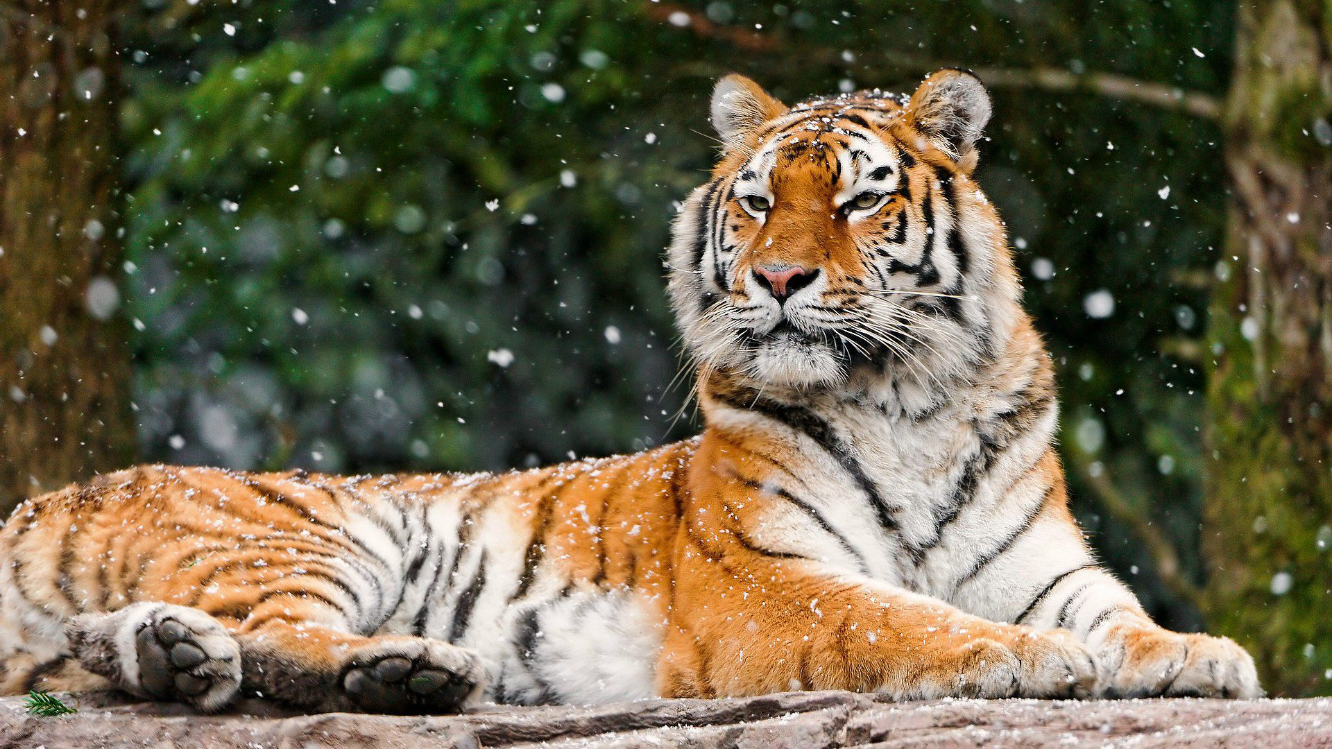 Зоопарк «Орто-Дойду»