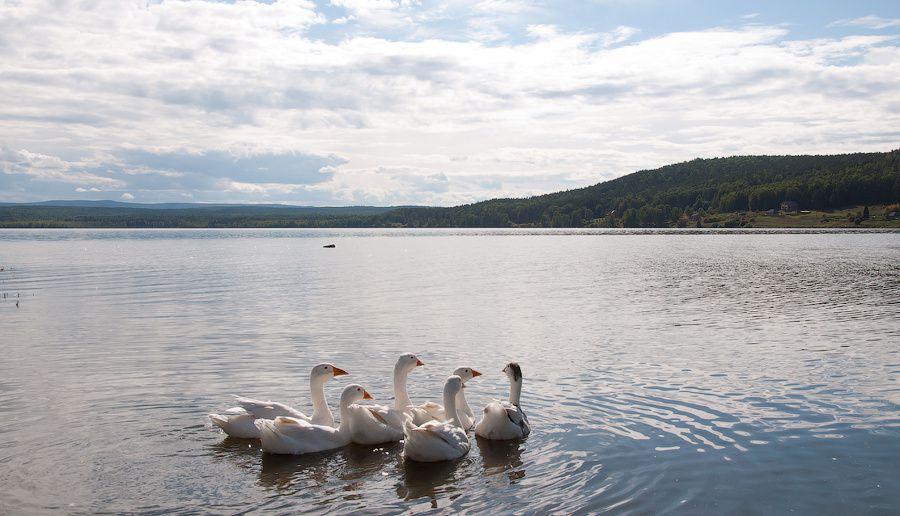 Озеро Большой Берчикуль источник: roman-novoselov.livejournal.com
