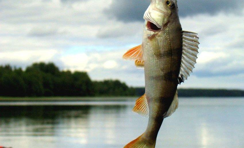 Озеро Большой Берчикуль источник: bolshoy-berchikul-osennyaya-rybalka.piskarik.ru