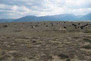 Курайская степь. Республика Алтай