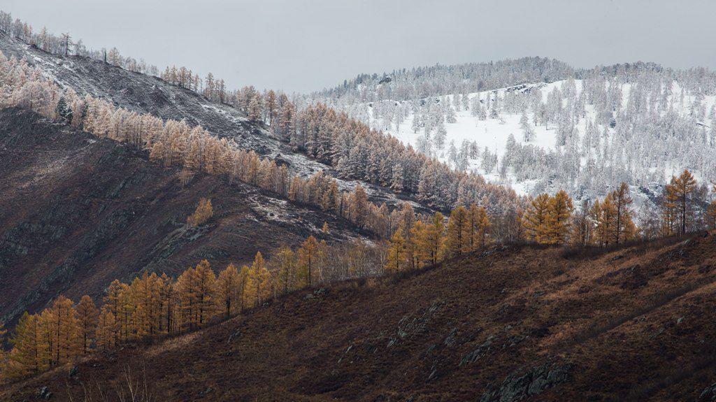 Алтай, Фото