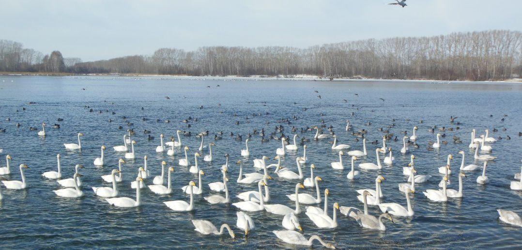 Озеро, Алтайский край, фото