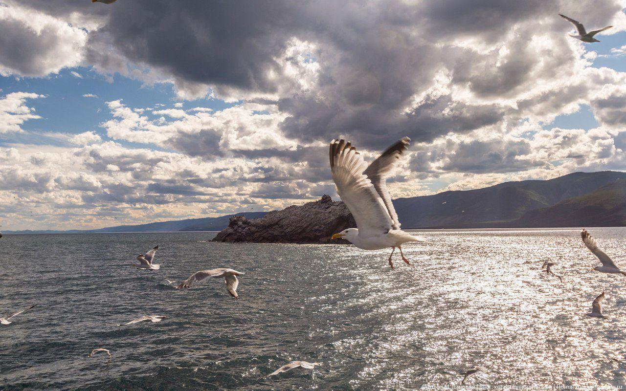 Байкал, чайки, Фото