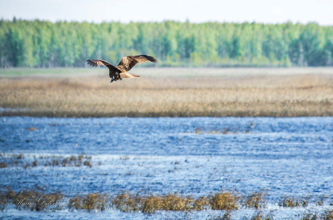 Озеро Тенис, Крутинский район, Омская область, Фото