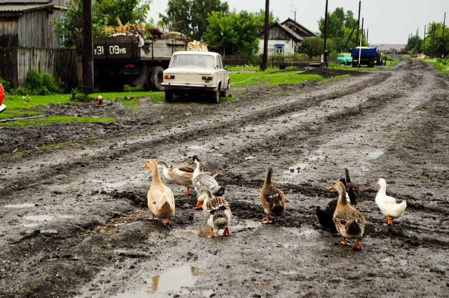 Веснянка, Куйбышевский район, Новосибирская область, фото