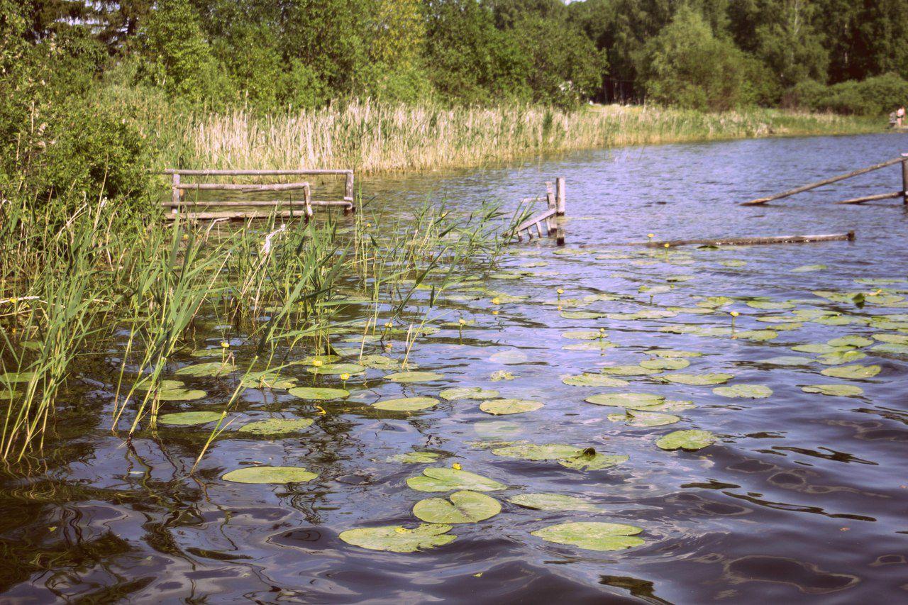 Омская область, фото