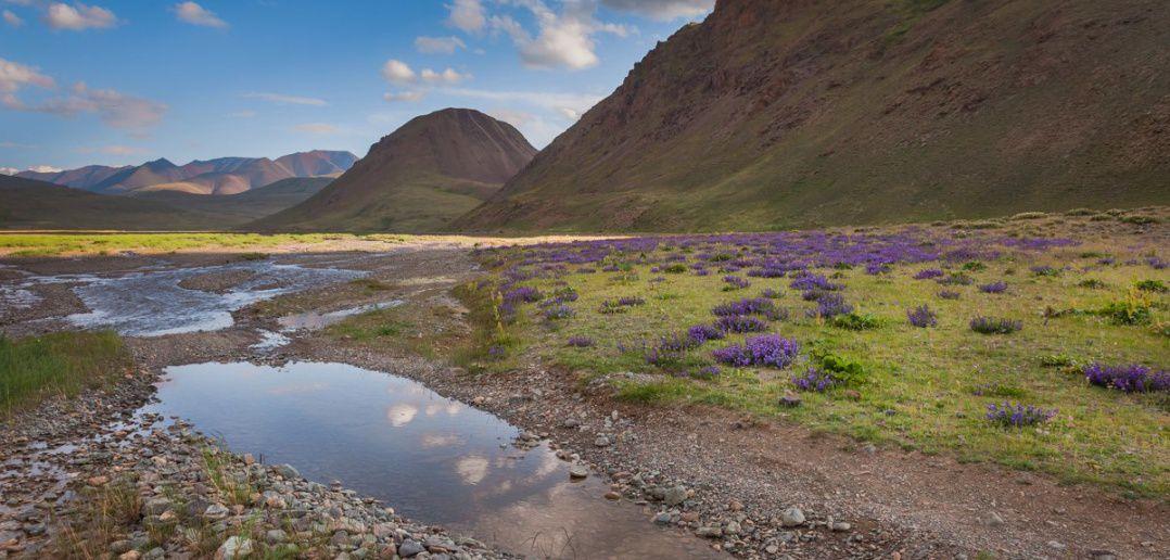 Алтай, Чаган-Бургазы, Саржемата, фото